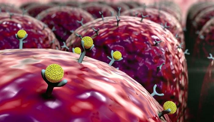Receptors for immune system