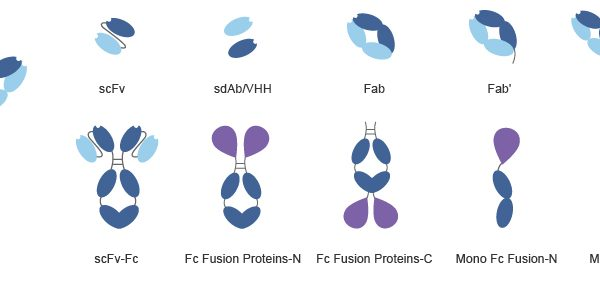 Various types of Recombinant antibodies