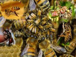 Honeybee swamp