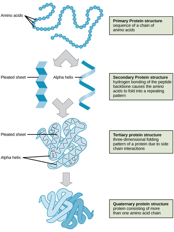 variuos structures of proteins