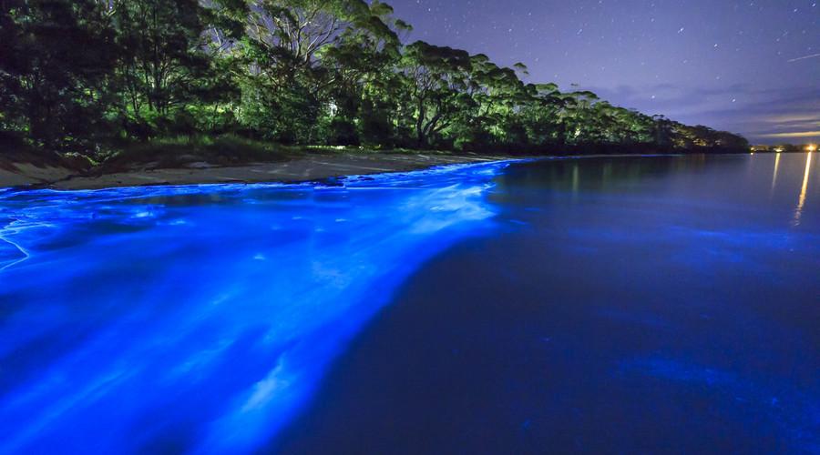 maxican beaches and bioluminiscence